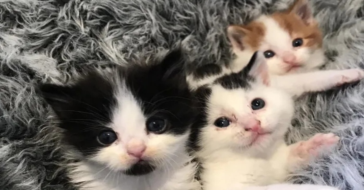 4 gattini rinascita video