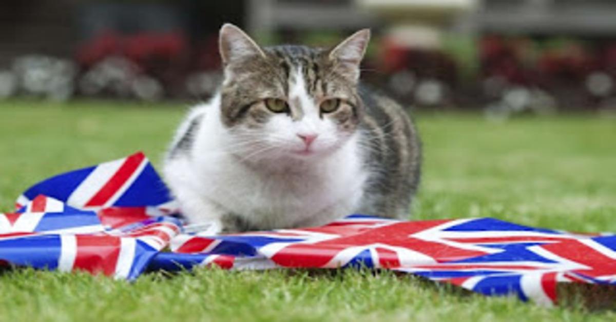 Larry Downing Street gattino video
