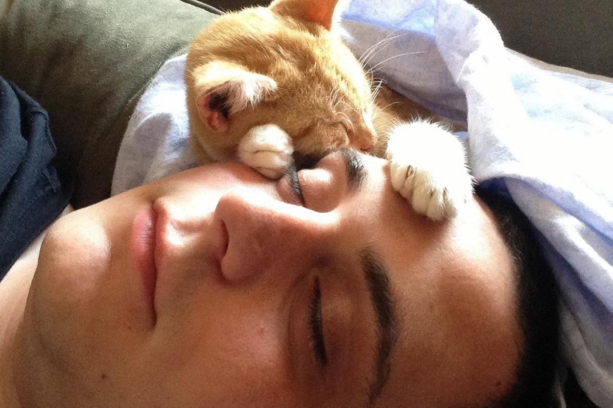 gattino dorme sulla faccia del padrone