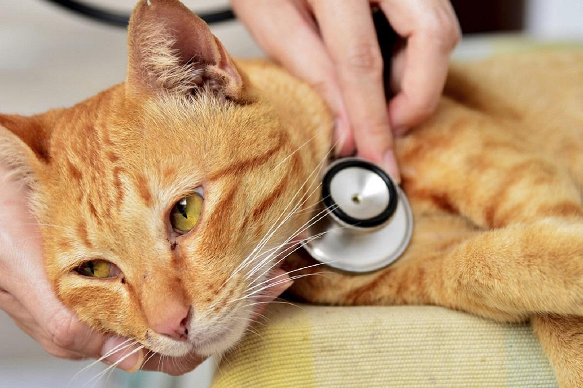 gatto sottoposto a visita