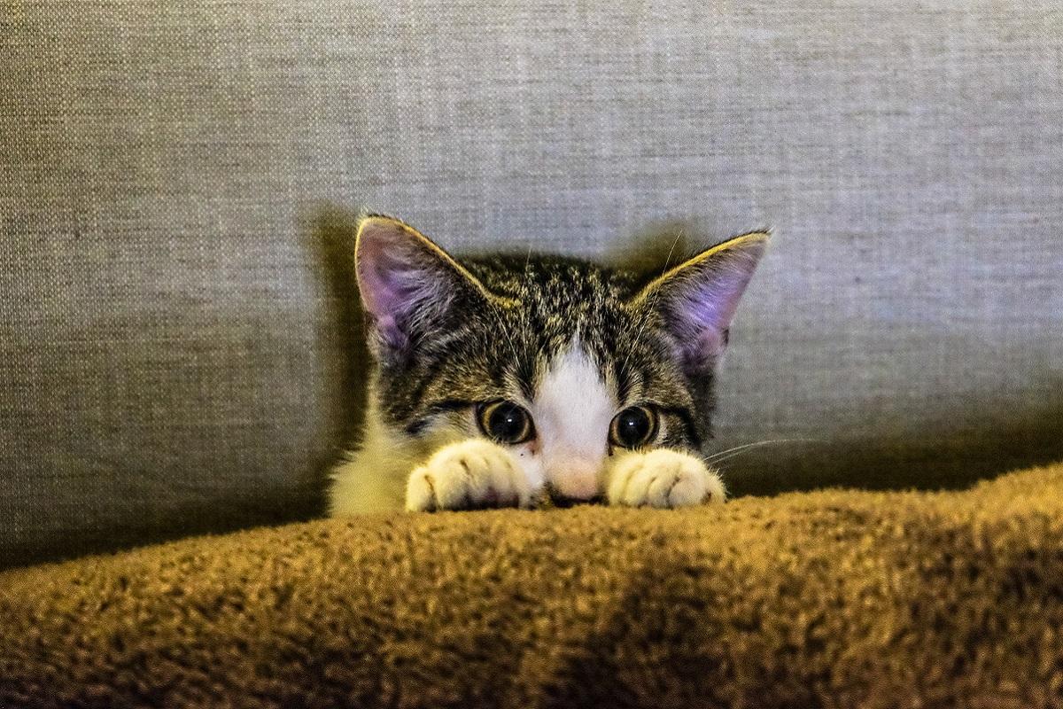 gatto ha paura