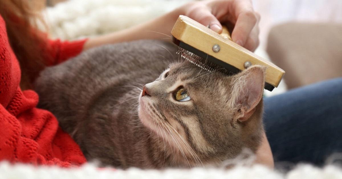 coccole al gatto con spazzola