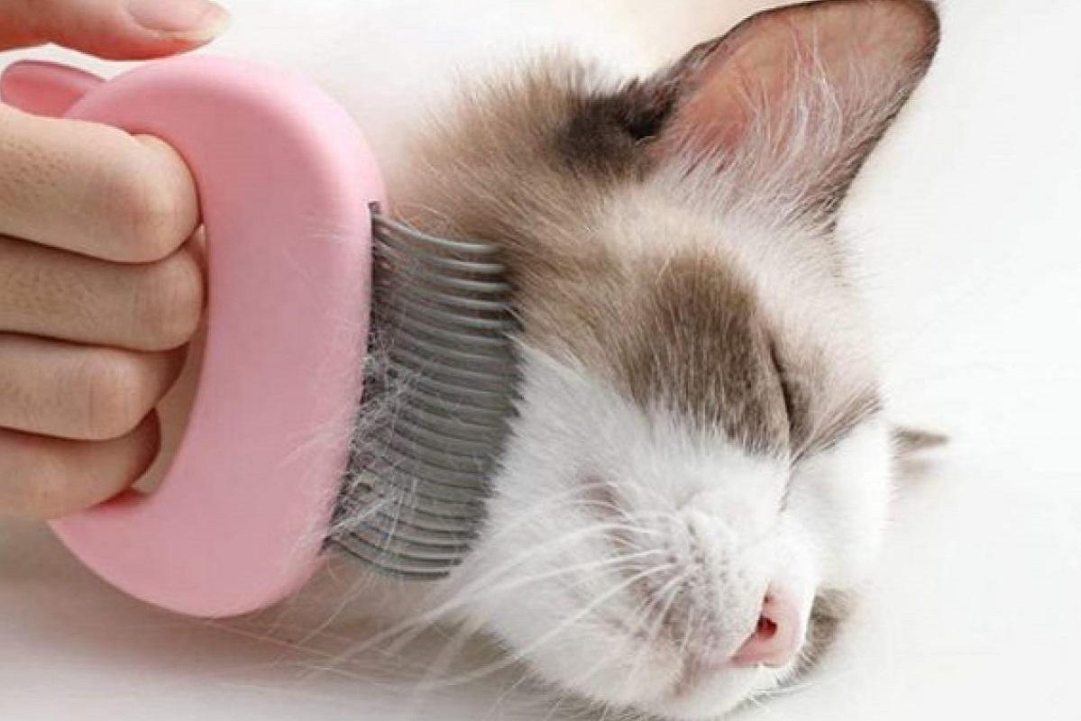 gattino si lascia spazzolare