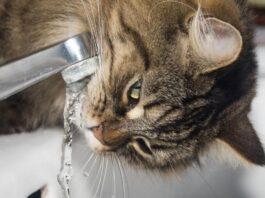 quando iniziano a bere acqua i gattini