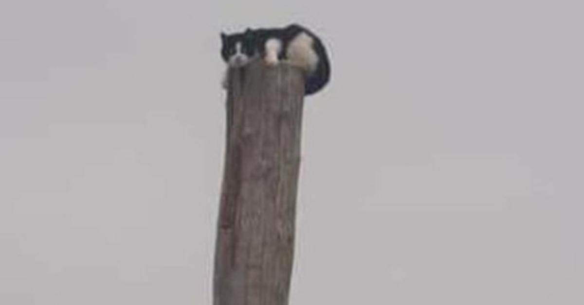 Gatto abbandonato sopra ad un palo