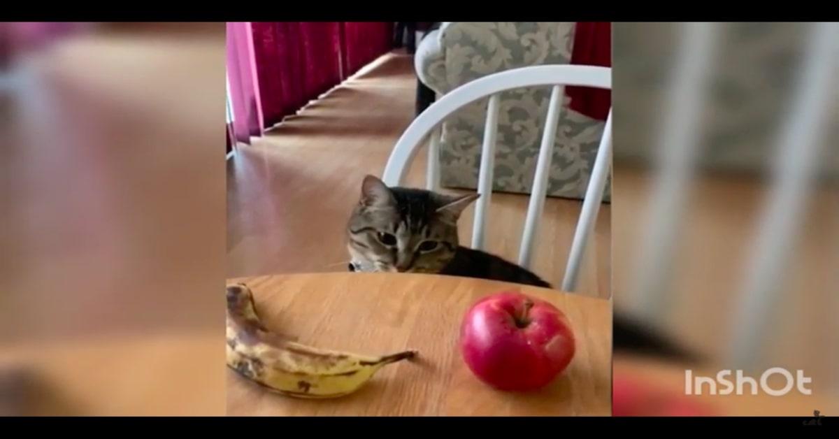 gattino guarda mela e banana