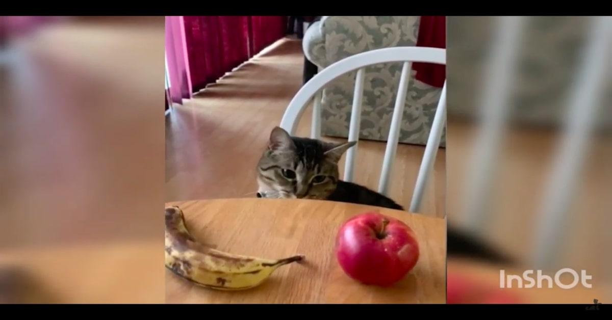 gatto con davanti mela e banana sul tavolo