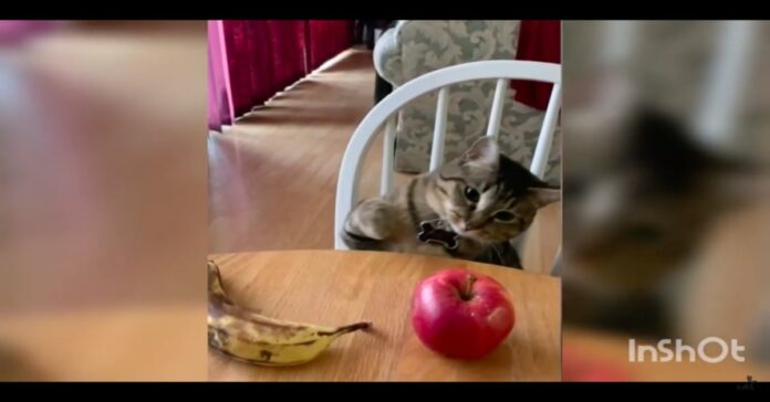 gatto indica la mela