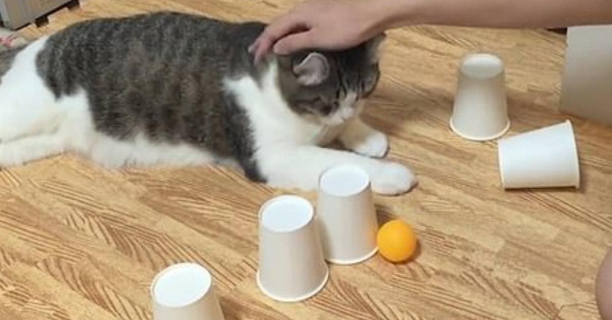 Snow gattino palla video