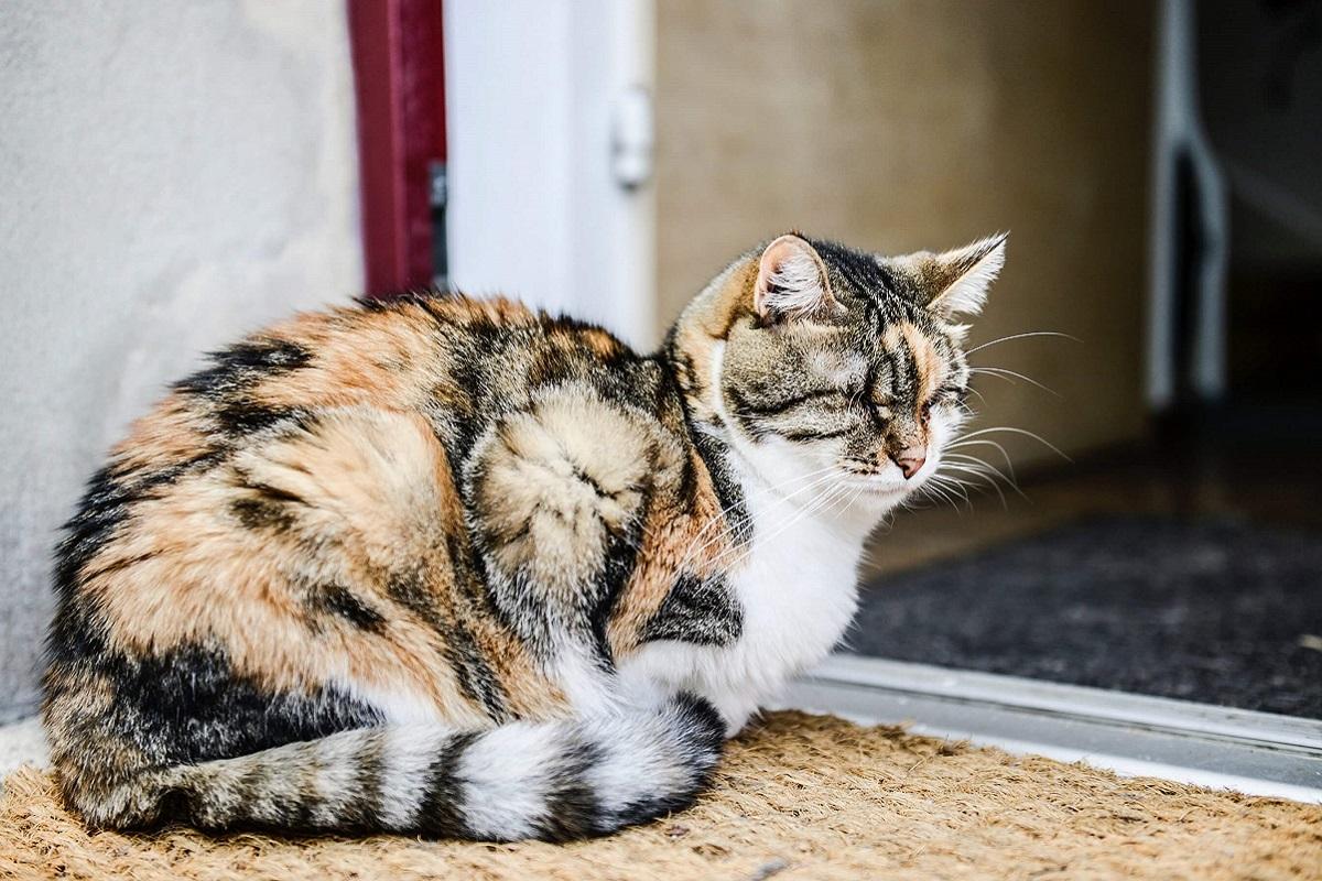 gatta sullo zerbino