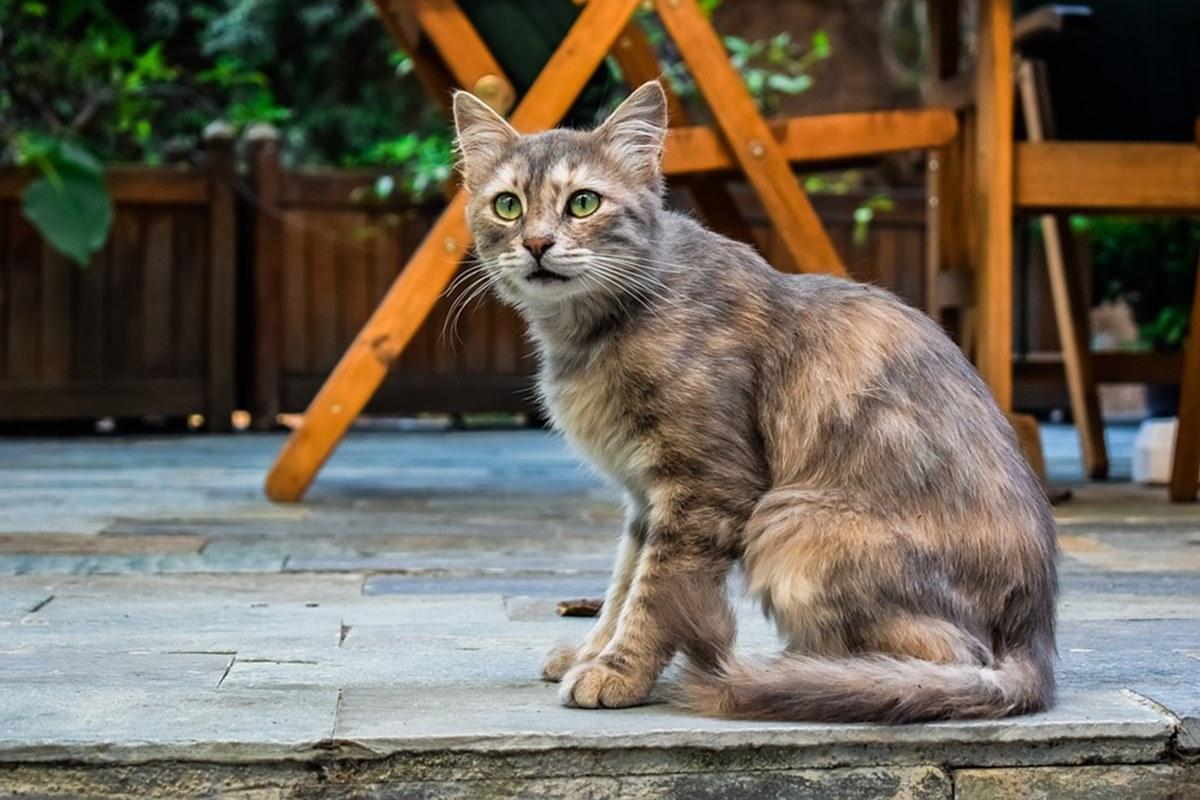 gatto seduto in giardino