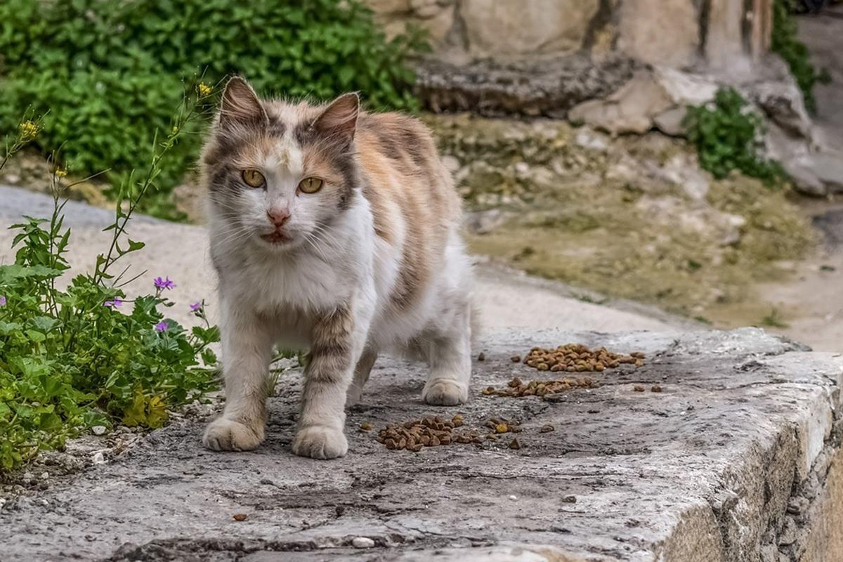 gatto randagio in giardino