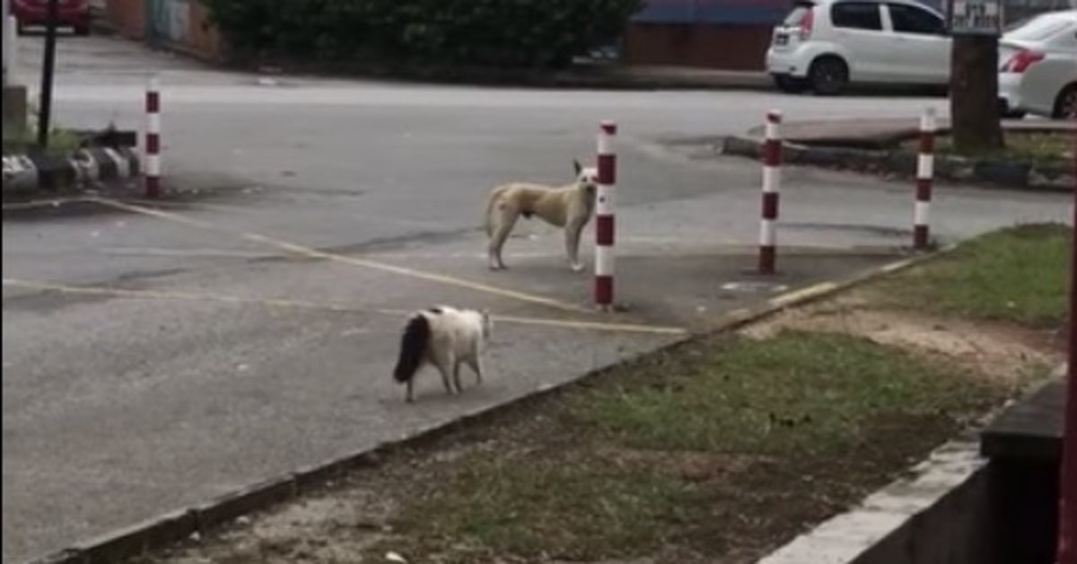 cane terrorizzato da gatto