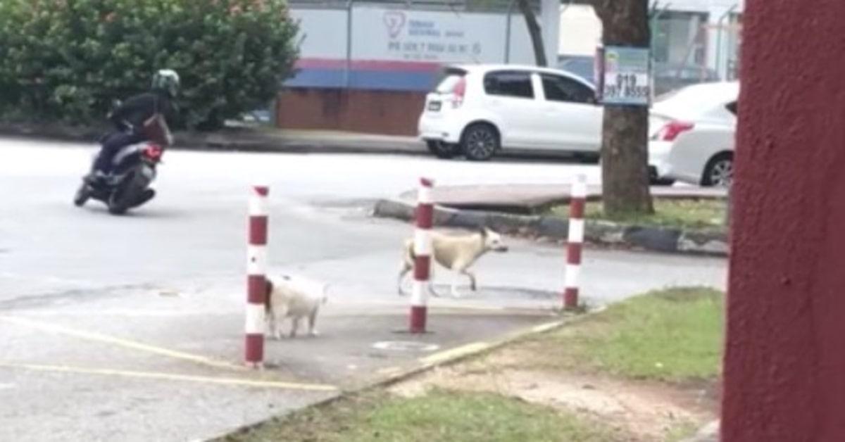 cane scappa da gatto che lo insegue
