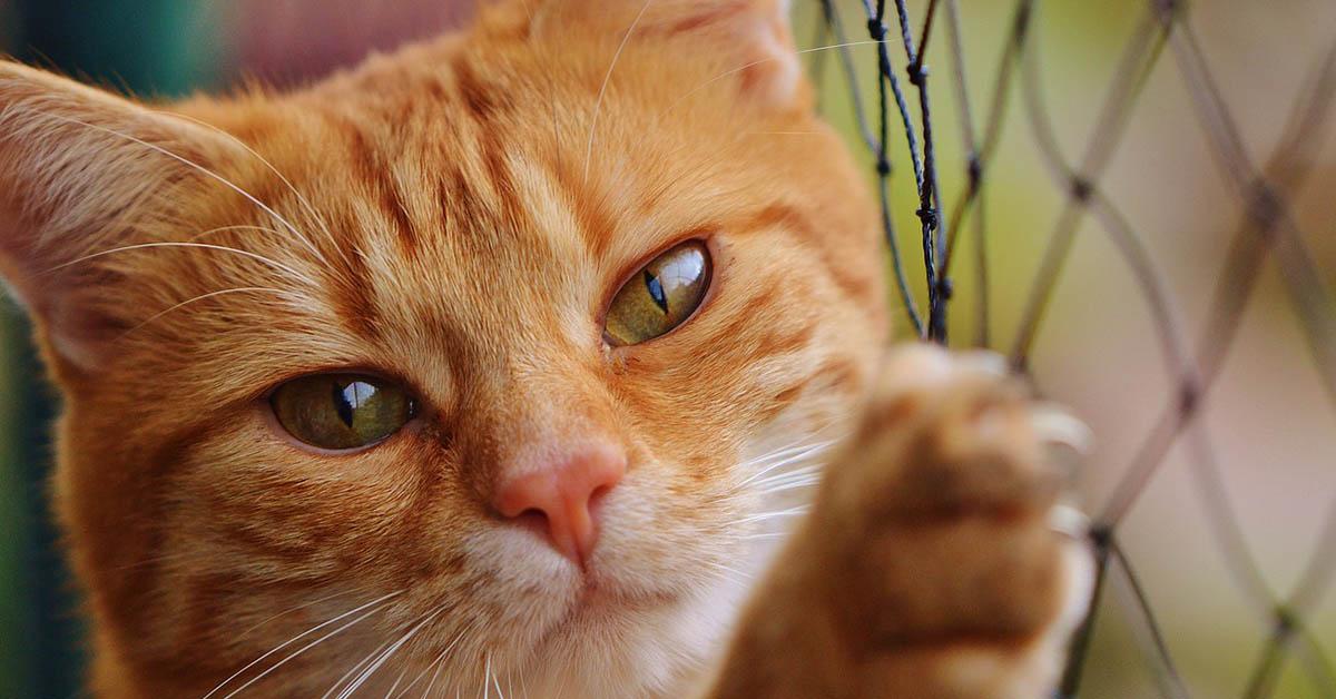 clamidiosi nel gatto