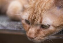 gattino giù di corda