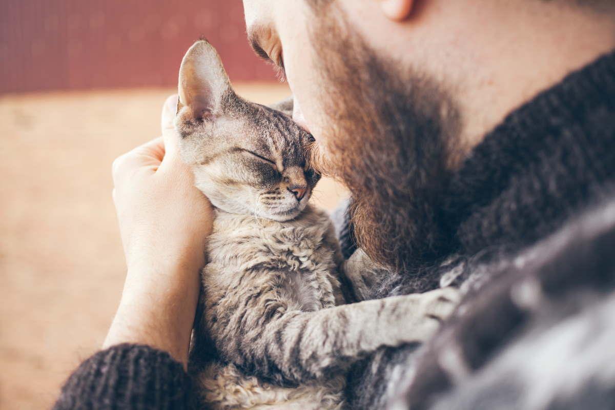 rapporto umano gattino