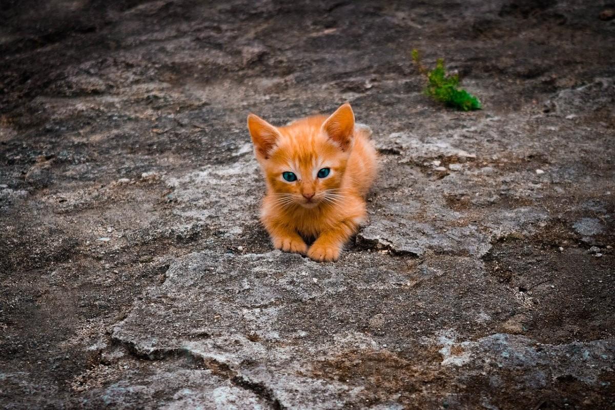 gattino per terra