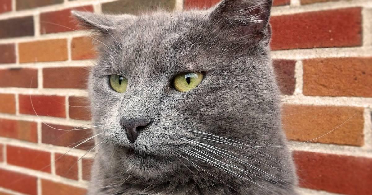 gatto con l'espressione buffa