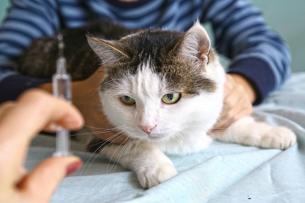 insulina al gatto