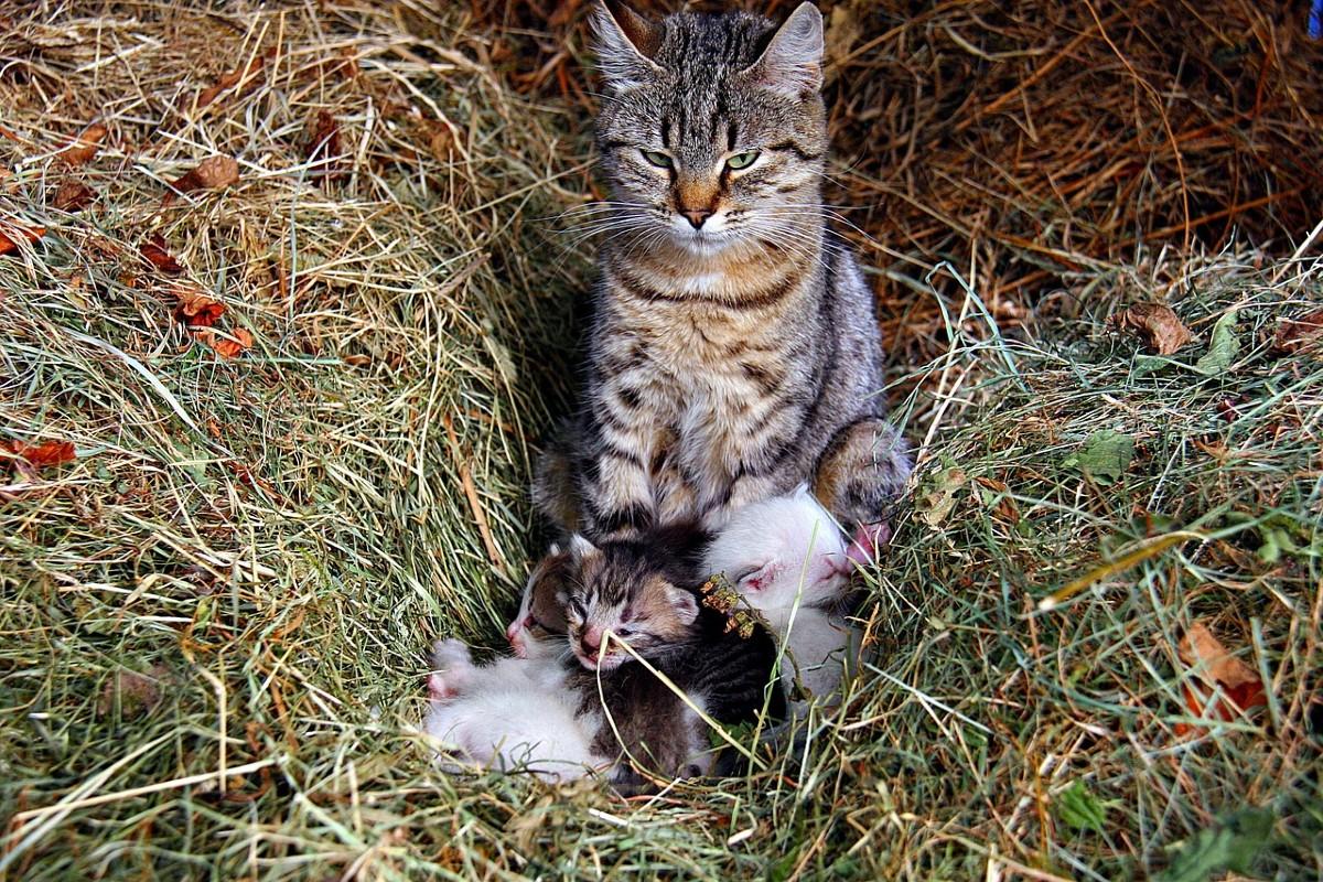 gattini e mamma gatta