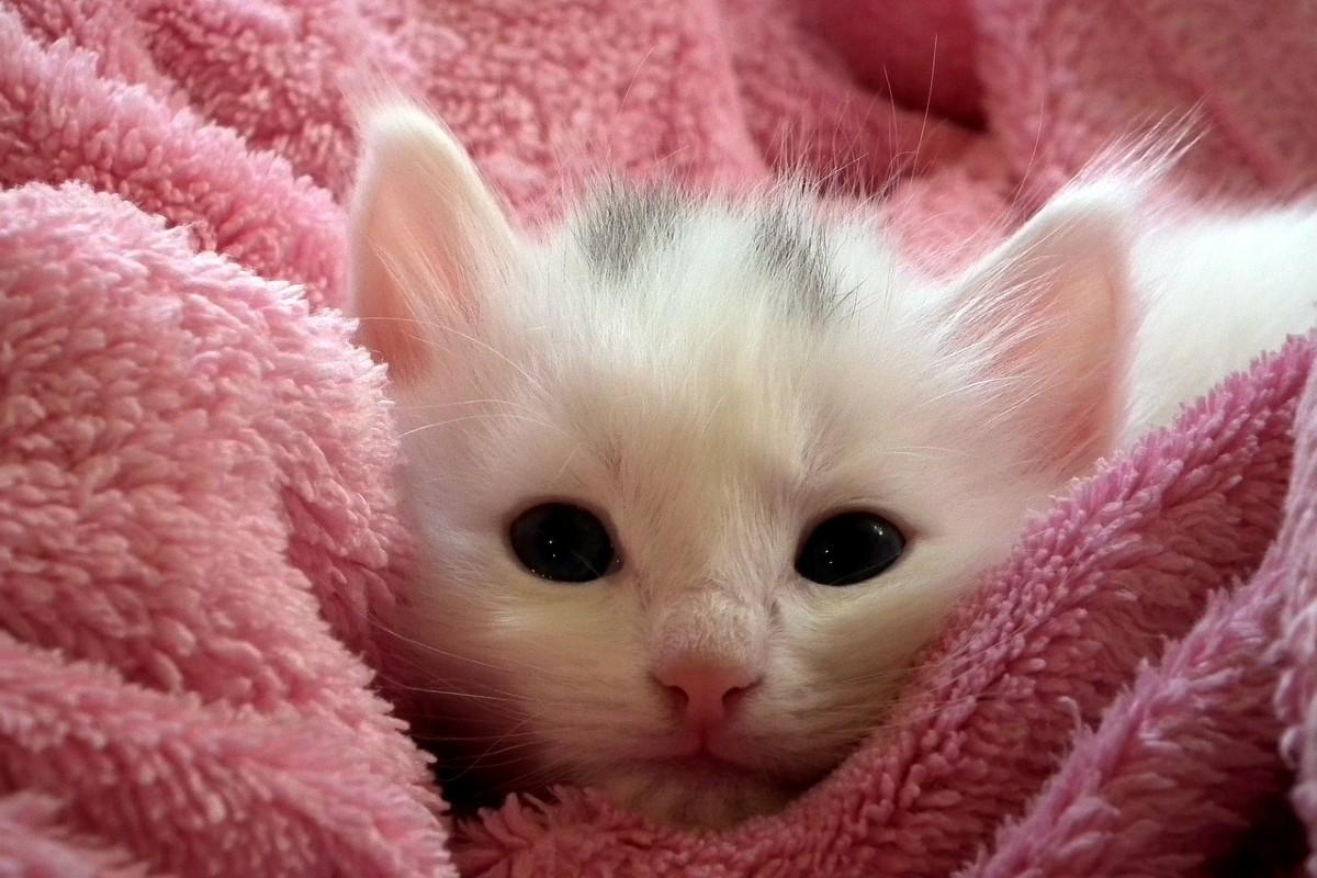 gattino tra le coperte