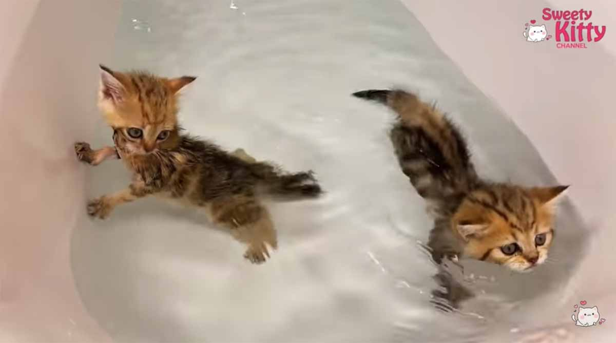 micetti fanno il bagno
