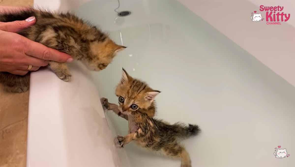 gattino in acqua