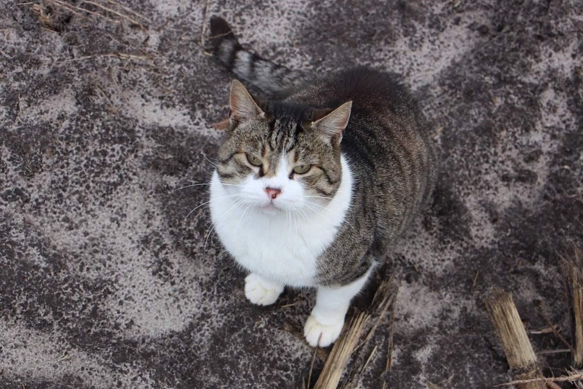gatto che guarda verso l'alto