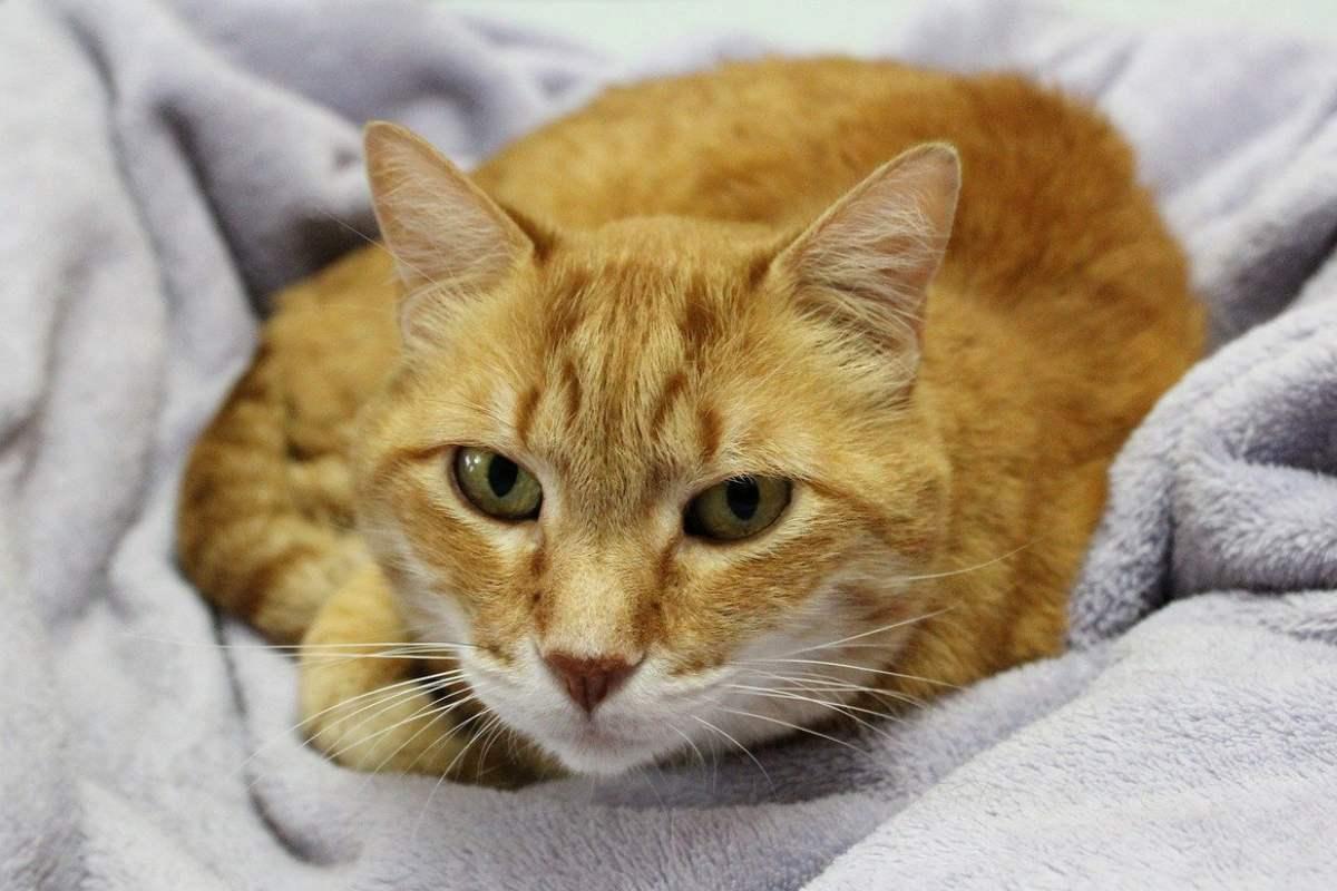 gatto arancione a letto