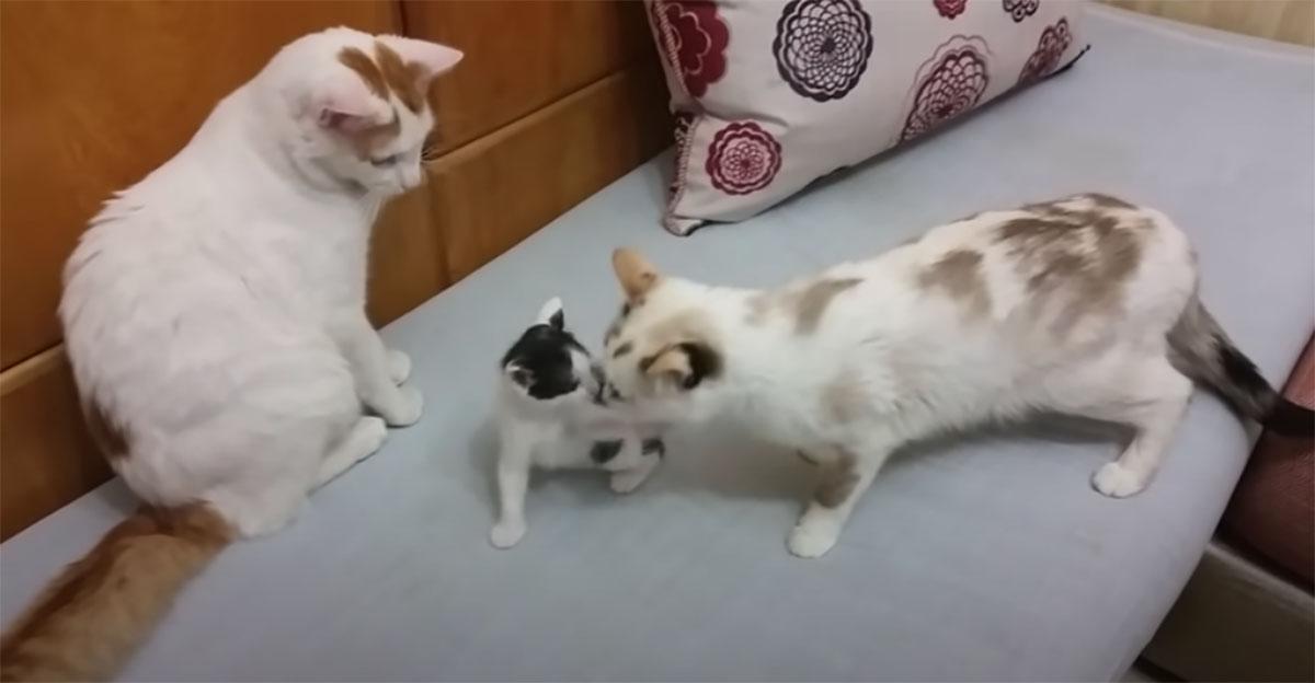 gatti grandi e gatto piccolo