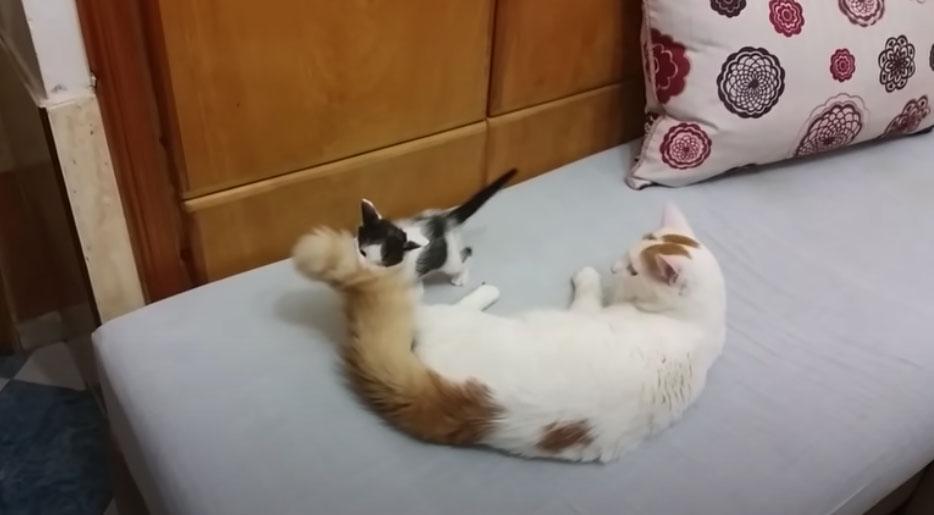 mamma gatto e gattino