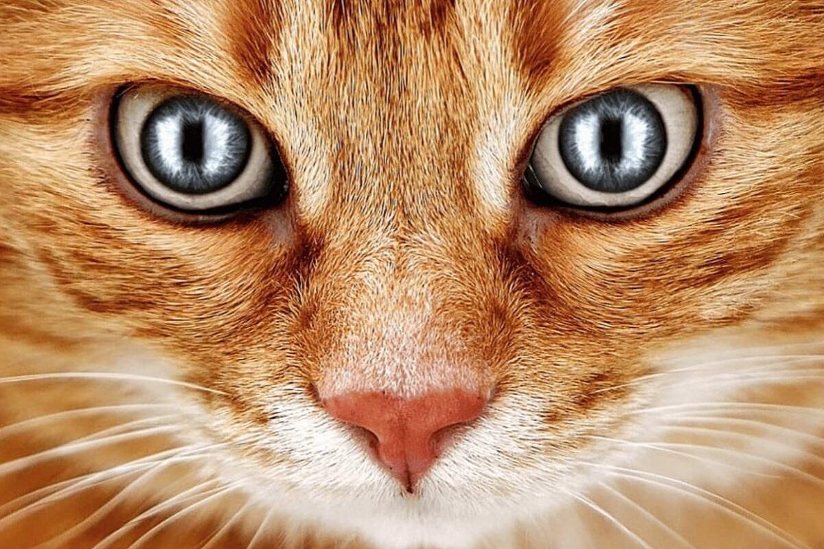 gatto rosso protegge