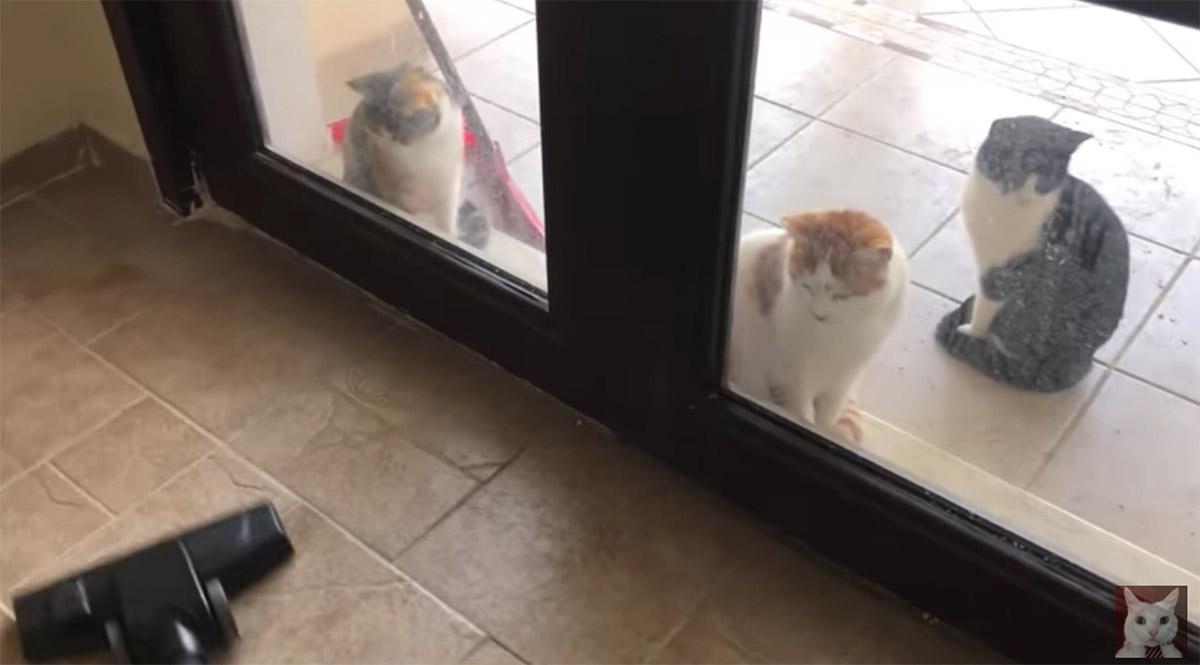 gatti lasciati fuori