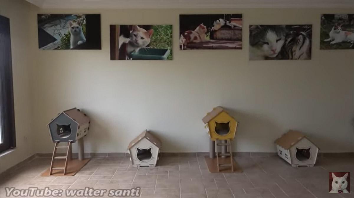 stanza da gatto
