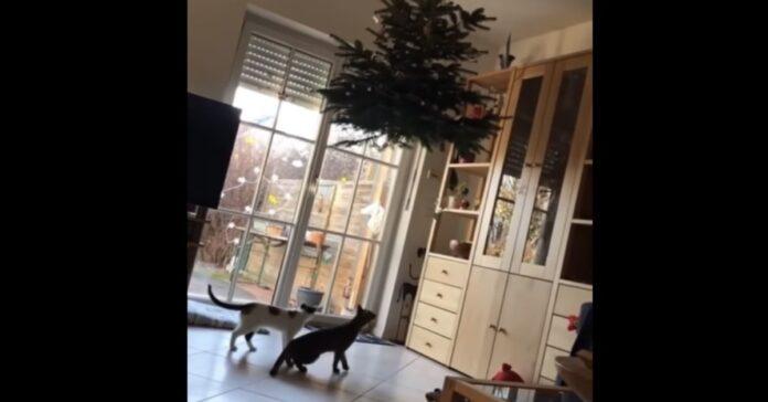 gatti vogliono distruggere albero di natale