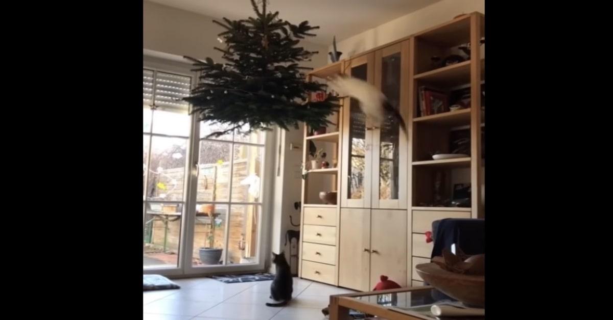 gatto riesce a saltare sull'albero di natale