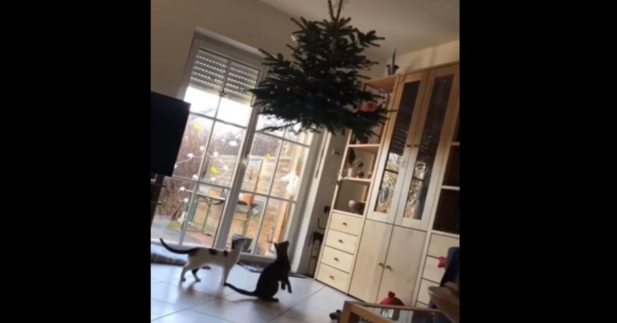 gatti sotto albero di natale appeso al soffitto