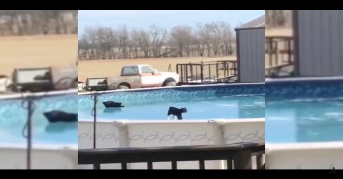 gattini cadono camminando sul ghiaccio
