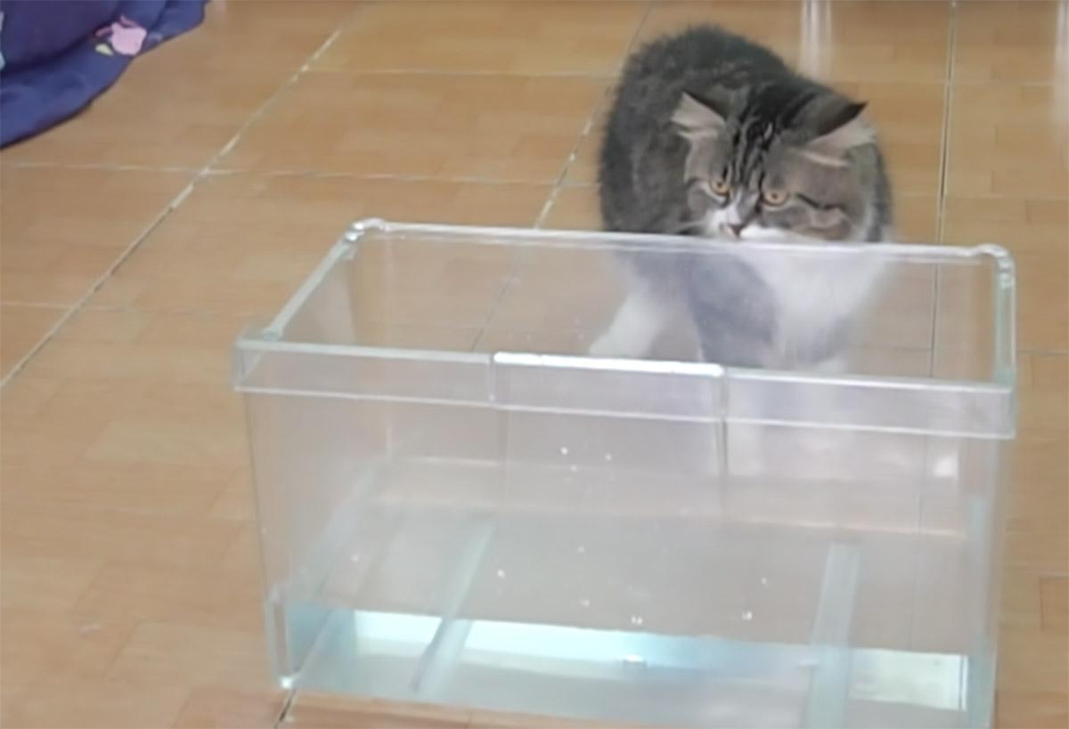 gatto che guarda una vasca