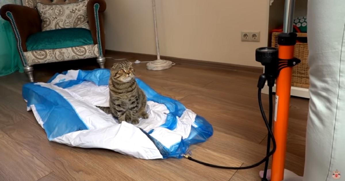 gattina Rory alle prese con la Ice Bath Challenge