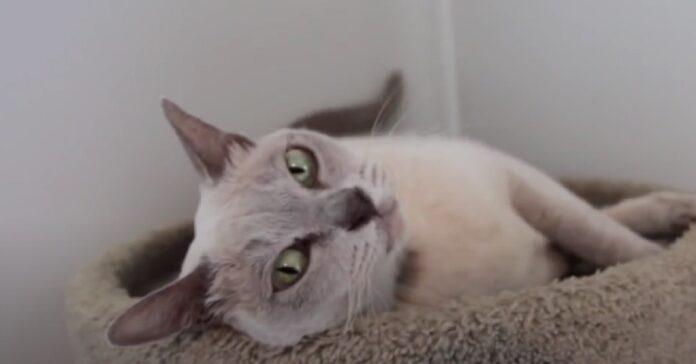 gatto salvo lavatrice