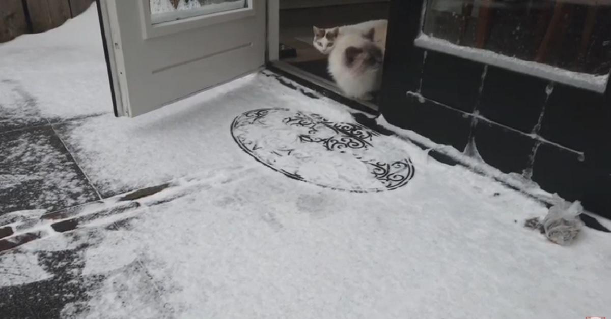 gattini Bowie e Bella vedono la neve per la prima volta