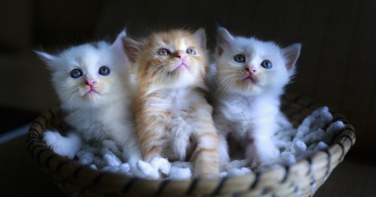 gattini appena nati iniziano a camminare