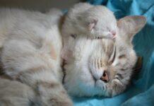 gattini dove farli dormire comodamente