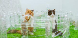 gattini e il labirinto invisibile