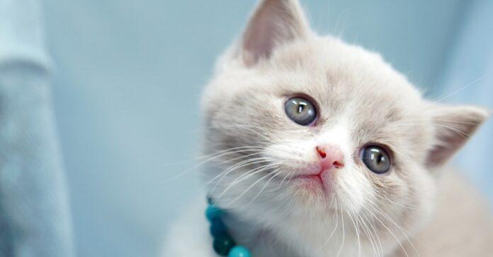 gattino Kokos incontra per la prima volta suo papà William