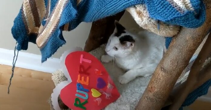 gattino Rupert riceve un regalo di San Valentino