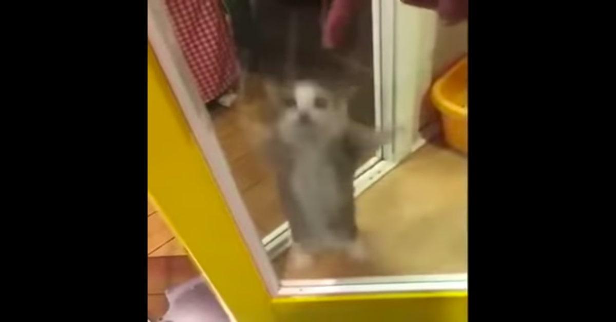 gatto balla una canzone spagnola