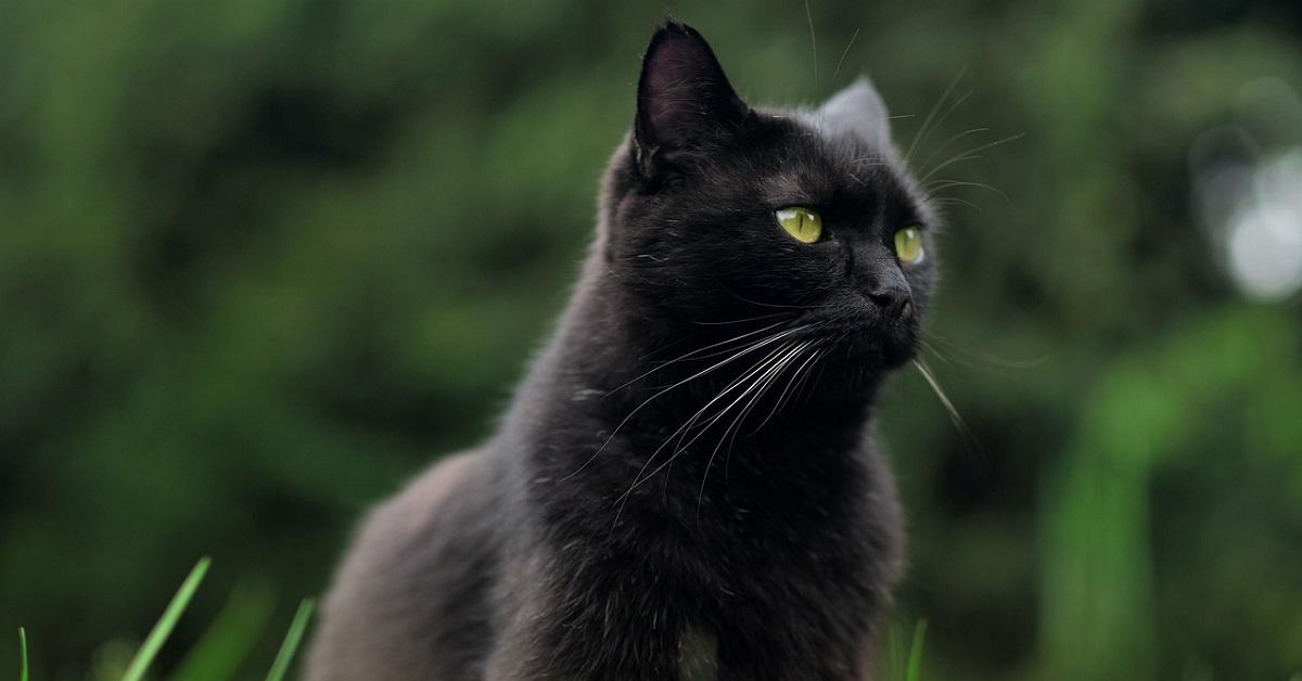 gattino che lotta con il tappeto